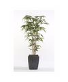 Tropische kunstplant Bamboe Promo 150 cm